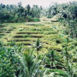I profumi di Bali